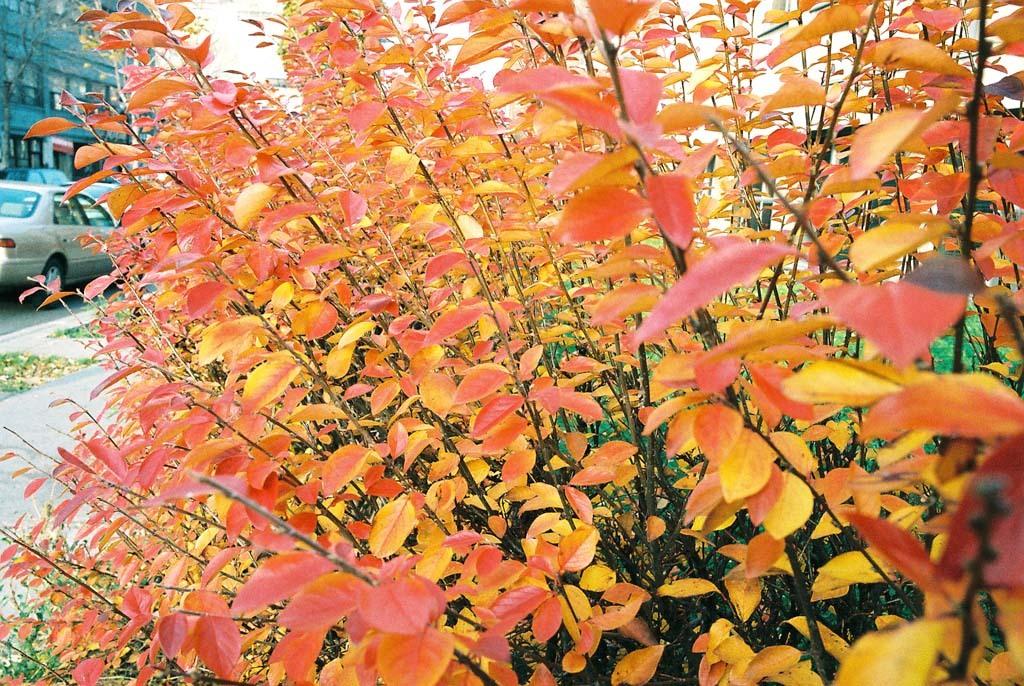 代表秋天树叶的图画